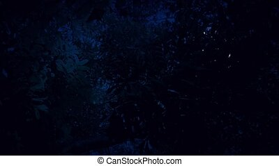 Moving Under Jungle Trees With Moon - Moving underneath...