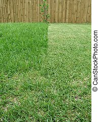Mowed Grass - a picture showing a back yard where half of it...