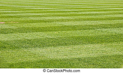 Mowed Grass Field - Fresh Cut green grass on a new baseball ...