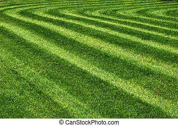 Parallel lines mowed grass in park as background