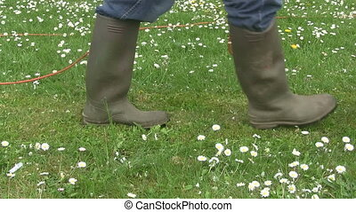 Mowing the lawn. - Man mowing the lawn full of daisies using...