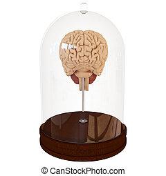 mozek, 3, lidský, render, spor.