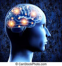 mozek, -, illustration., 3