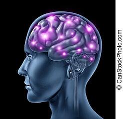 mozek, lidský, inteligence