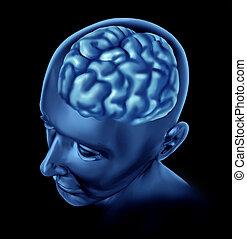 mozek, lidský