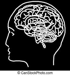 mozek, nakreslit plán