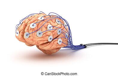 mozek, polygraph, analysis., test.