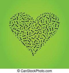mrówka, serce