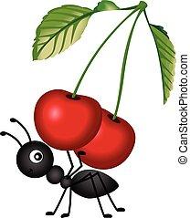 mrówka, transport, wiśnie, czerwony