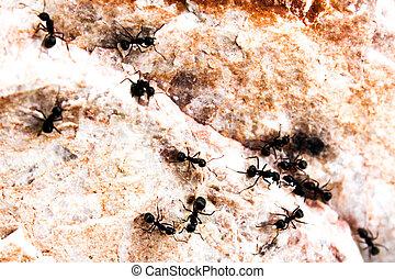 mrówki, plądrowanie, na, powierzchnia, od, przedimek określony przed rzeczownikami, marmur, kamień