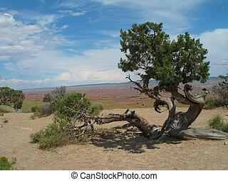mr., árbol, miyagi