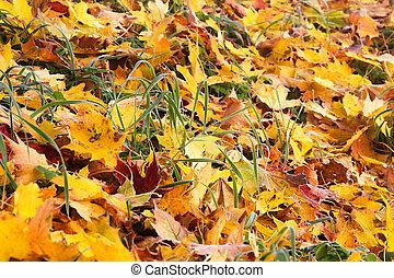 mroźny, autumn odchodzi