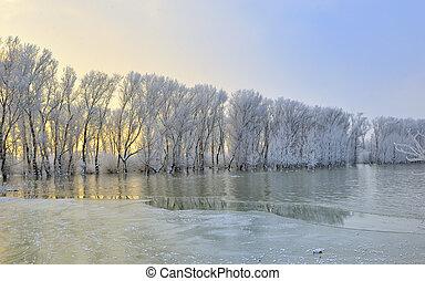 mroźny, drzewa, zima