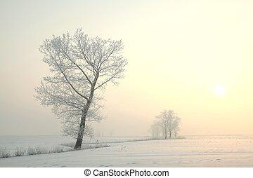 mroźny, zima drzewo, na, świt