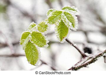 mroźny, zima, liście