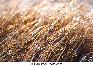 mrożony, piękny, rośliny, pokryty, z, sople, w, sunlight., zima, tło., selekcyjny, ognisko., płytki, głębokość pola