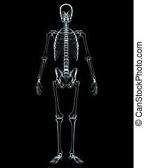 mrtvola, čelo, mužský, rentgen, názor