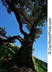 mt, árvore, tamaplais