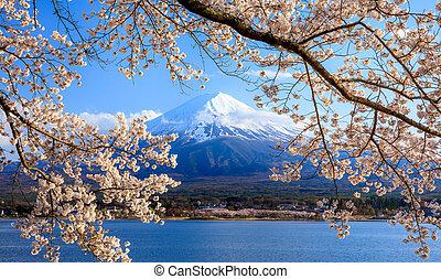 Mt. Fuji and Cherry Blossom at lake Kawaguchiko, Japan - Mt....