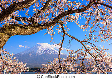 Mt. Fuji and Cherry Blossoms - Kawaguchi Lake, Japan at Mt....