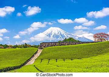 Mt. Fuji and Tea Fields - Fuji, Japan at Mt. Fuji and tea...