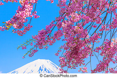 Mt Fuji and Weeping cherry blossom