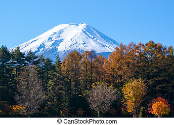 Mt. Fuji and yellow larch