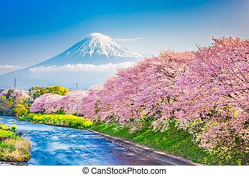 Mt. Fuji, Japan spring landscape. - Mt. Fuji, Japan spring ...