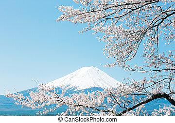 Mt. Fuji with cherry blossom