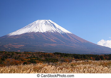 Mt. Fuji with Japanese silver grass
