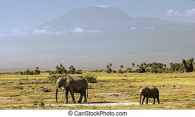 mt kilimanjaro with an elephant cow and calf at amboseli