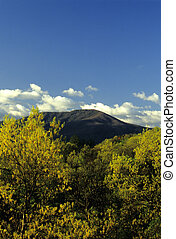 Mt LeConte, Spring - Mt LeConte from Foothills Parkway, ...