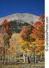 Mt. Shavano Color