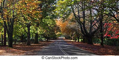 mt, wilson, automne, couleurs