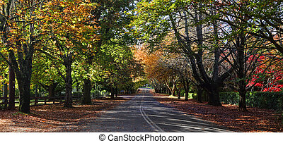 Mt Wilson Autumn Colours - A tree lined avenue in Mt Wilson...