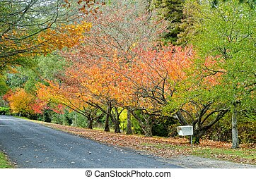 Mt Wilson Autumn Scene