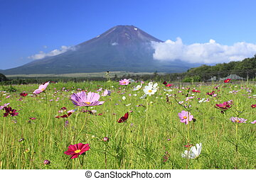 Mt.Fuji and Cosmos - Mt . Fuji and beautiful Cosmos in ...