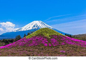 Mt.Fuji mound of moss phlox flowers - Monument of moss phlox...