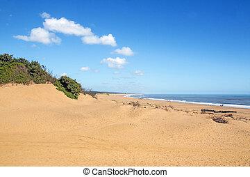 Mtunzini Beach Coastal Landscape in South Africa