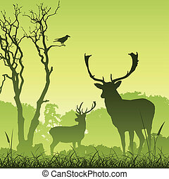 mužský, jelen, jelen
