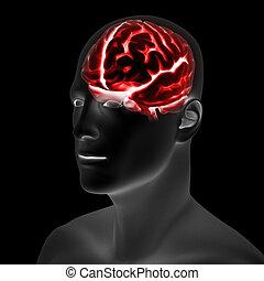 mužský, mozek