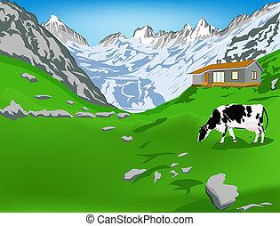 mucca casearia, in, alpi