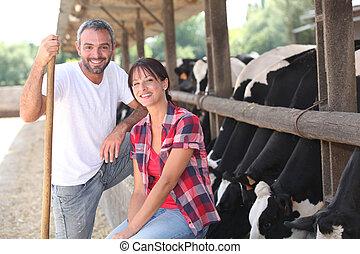 mucca, coltivatori
