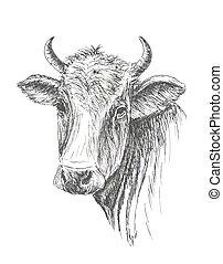mucca, faccia, fondo, disegnato, bianco, mano