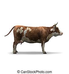 mucca, isolato, interpretazione, fondo, bianco, 3d