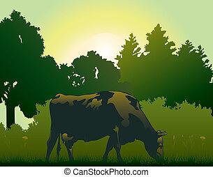 mucca, pascolo, in, il, mattina