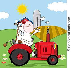 mucca, trattore rosso, contadino