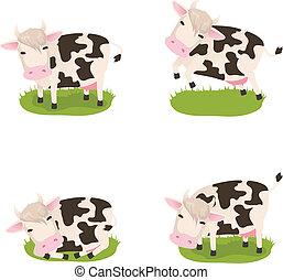mucche, carino, vettore, set