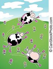 mucche, collina verde, ballo