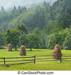 mucchi fieno, in, il, valle montagna